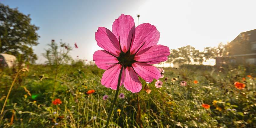 flower_header